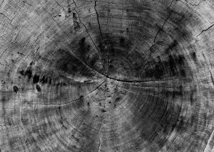Tree trunk showing rings